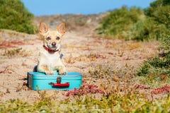 Perro abandonado y perdido Fotos de archivo