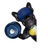 Perro activo del deporte Imagen de archivo