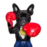 Perro activo del deporte Imagen de archivo libre de regalías