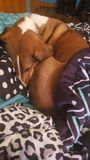 Perro acurrucado y el dormir imagen de archivo