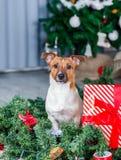 Perro adorable de la Navidad fotografía de archivo libre de regalías