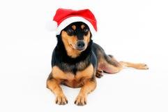 Perro adorable que desgasta el sombrero de Santa Fotografía de archivo