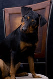 Perro adorable y muy curioso Fotografía de archivo