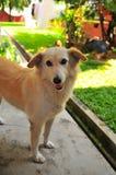 Perro adulto lindo Fotografía de archivo libre de regalías