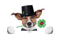Perro afortunado Imagen de archivo libre de regalías