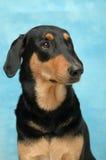 Perro agradable Imagen de archivo libre de regalías