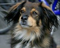 Perro agradable 2 Imágenes de archivo libres de regalías