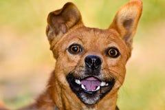 Perro agradable Fotografía de archivo libre de regalías