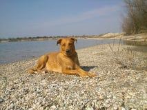 Perro agradable en la orilla Imagen de archivo