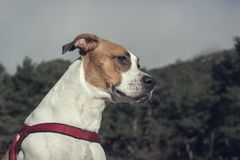 Perro agradable que disfruta de un paseo en el bosque imagen de archivo