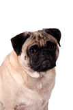 Perro aislado del barro amasado Imagen de archivo libre de regalías