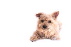 Perro aislado en blanco imágenes de archivo libres de regalías