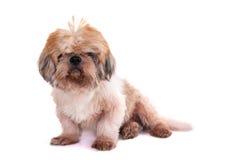 Perro aislado en blanco imagen de archivo