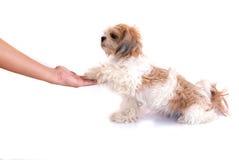 Perro aislado en blanco foto de archivo