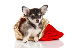 Perro aislado en el fondo blanco Imágenes de archivo libres de regalías