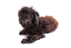 Perro aislado en el fondo blanco imagen de archivo libre de regalías