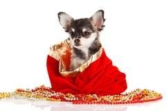 Perro aislado en el regalo blanco del fondo Fotografía de archivo