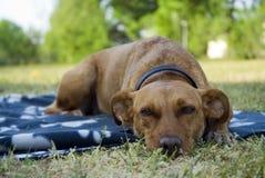 Perro al aire libre Fotos de archivo