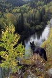 Perro al borde del acantilado Imagen de archivo libre de regalías