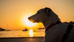 Perro al lado de la puesta del sol Fotografía de archivo libre de regalías