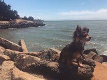 Perro al lado del agua Imagen de archivo libre de regalías