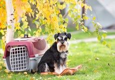 Perro al lado del portador en parque Imágenes de archivo libres de regalías