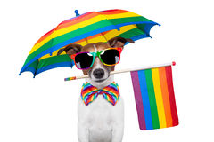 Perro alegre Fotos de archivo