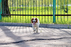 Perro alegre Imagen de archivo libre de regalías
