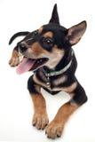 Perro alerta Imágenes de archivo libres de regalías