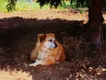 Perro alrededor Fotos de archivo