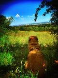 Perro alrededor Foto de archivo