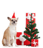 Perro amarillo claro cerca de los presentes Fotografía de archivo libre de regalías