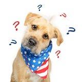 Perro americano político confuso Imagenes de archivo