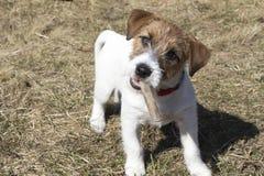 Perro amistoso Foto de archivo libre de regalías