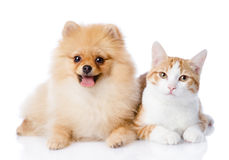Perro anaranjado del gato y del perro de Pomerania junto Imagen de archivo libre de regalías