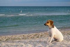 Perro animal en el fondo del mar, en la playa, océano del mar de la arena Foto de archivo libre de regalías