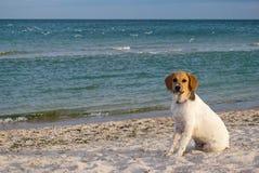 Perro animal en el fondo del mar, en la playa, océano del mar de la arena Foto de archivo
