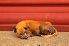 Perro apesadumbrado Foto de archivo libre de regalías