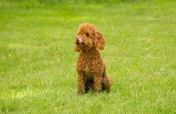 Perro astuto Imágenes de archivo libres de regalías