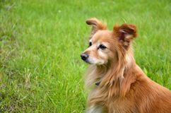 Perro astuto en jardín Fotos de archivo libres de regalías
