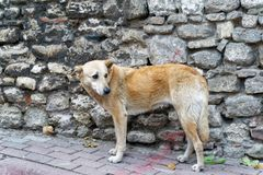 Perro asustado de la calle imagen de archivo