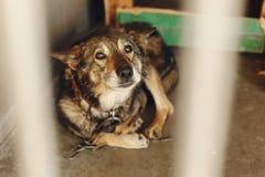 Perro asustado en la jaula con los ojos gritadores tristes, mome emocional del refugio Fotografía de archivo libre de regalías