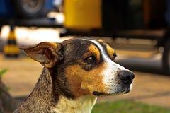 Perro atento y mirada brillante foto de archivo