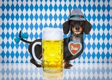 Perro bávaro de la cerveza foto de archivo libre de regalías