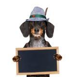 Perro bávaro de la cerveza fotografía de archivo libre de regalías