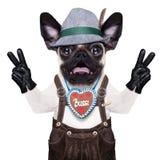 Perro bávaro loco sorprendido Fotos de archivo
