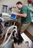 Perro bajo anestesia Imagen de archivo libre de regalías