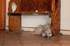 Perro bajo banco de madera imagenes de archivo