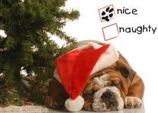 Perro bajo el árbol de navidad fotos de archivo