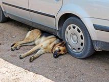 Perro bajo el coche Fotografía de archivo